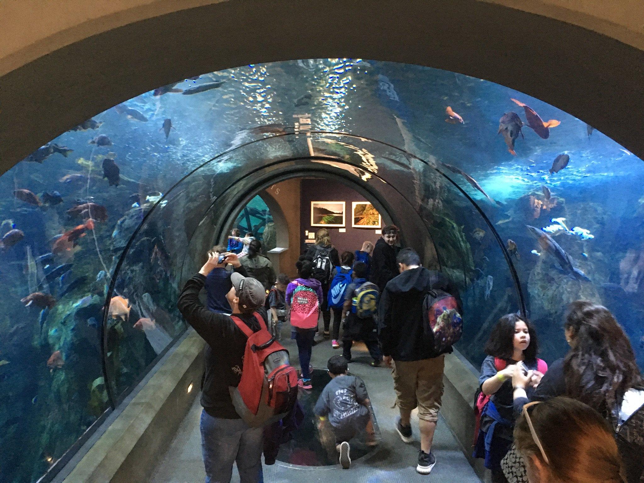Current status: School of fish/class…